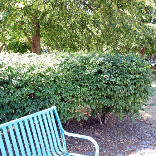 Blue-park-bench